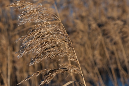 the dry grass  Stock Photo