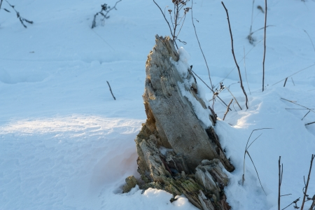 the stump in the snow