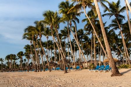 the palms on the beach Stock Photo - 16874048