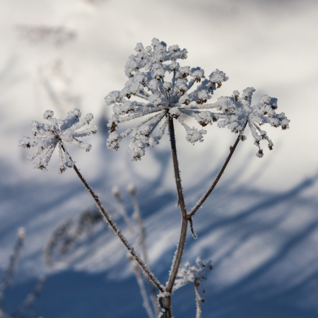 The photo shows the snow flowers