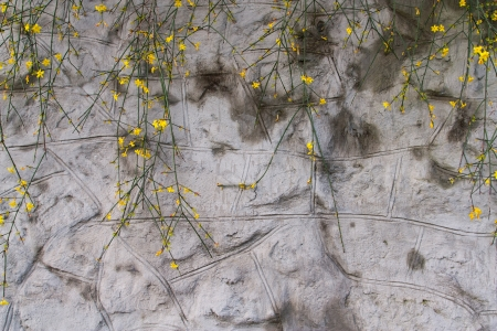 The photo shows the yellow flowers on a gray wall