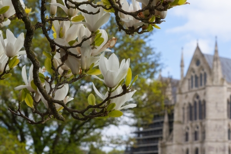 white flowers and cathedral