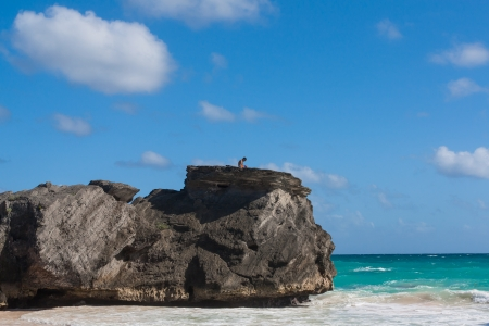 The photo shows the lonely on a rock on the beach in Bermuda. photo