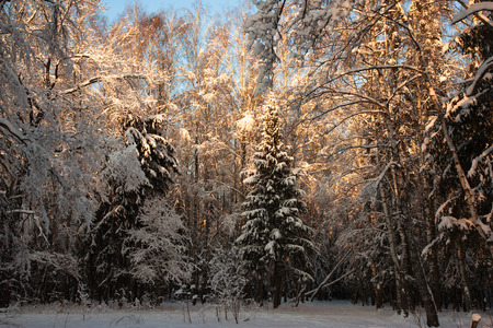 The photo shows the winter landscape  Stock Photo