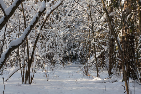 The photo shows the winter forest.