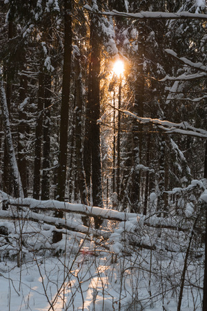Pictured on the light of the sun through the thicket. Stock Photo