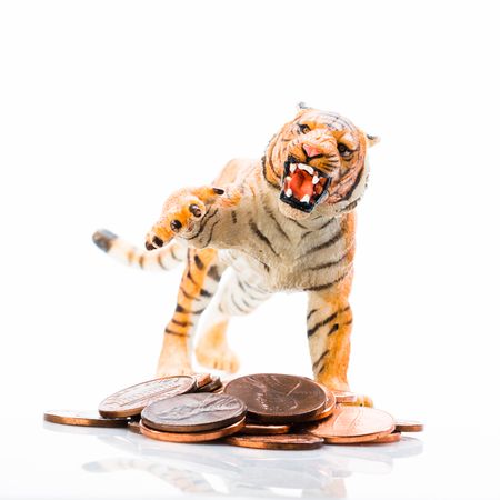 Photo shows concept: the toy tiger protection money.