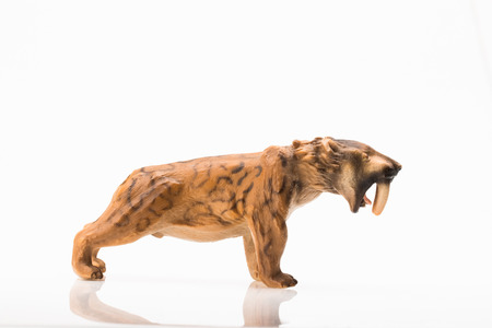Photo shows the toy saber toothed tiger on white.