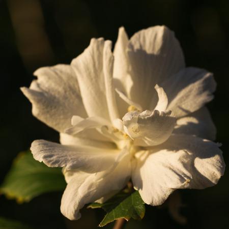 Photo shows the white flower. Stock Photo