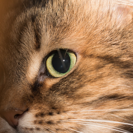 In the photo you see the face of a domestic cat close-up.