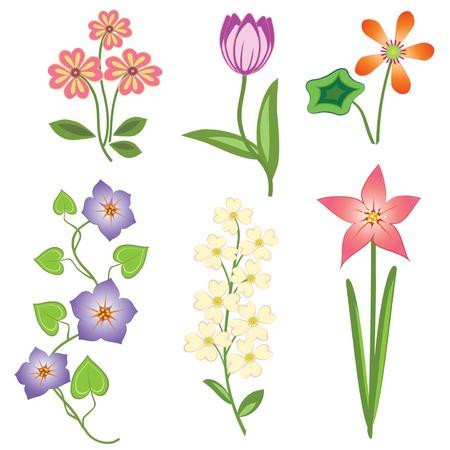 Blumen-Set Auf Weißem Hintergrund. Kamille, Orchidee, Chrysantheme ...