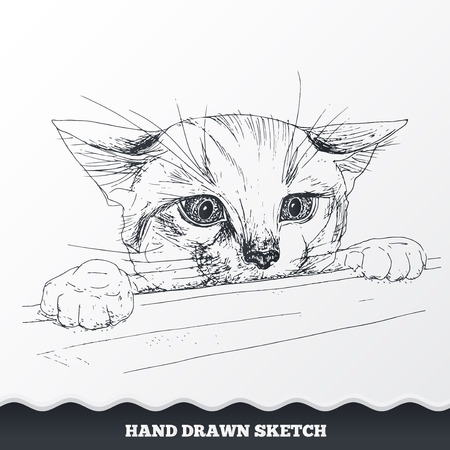 look out: Hand drawn cat face. Sketched playful kitten muzzle look out from the desk. Pet neb symbol. Vector