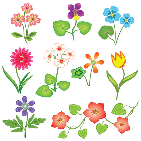 Flower set. Nasturtium, primula, viola, anemone, tulip, gowan, dog-daisy, petunia. Spring flowers. Floral symbols with leaves. Color icons. May be used in cuisine. Vector isolated.