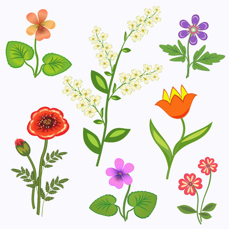 primrose: Flower set. Nasturtium, primula, viola, anemone, poppy, tulip, bird cherry. Spring flowers. Floral symbols with leaves. Color icons. May be used in cuisine. Vector isolated.