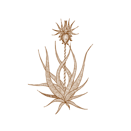 Decorative brown line flower Illustration