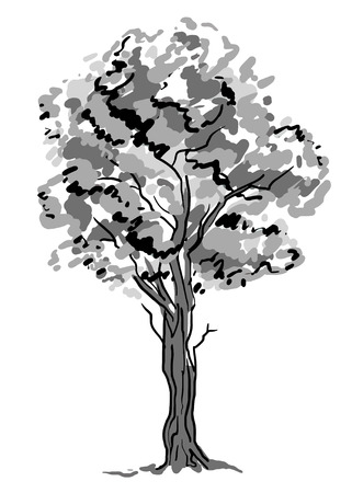 Deciduous tree sketch. Black contour isolated on white background. Simple art. Can be used for card banner template. Raster copy illustration Stockfoto