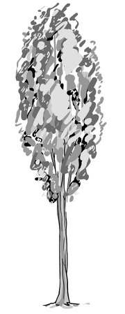 Deciduous tree sketch. Black contour isolated on white background. Simple art. Can be used for card banner template. Raster copy illustration. Reklamní fotografie - 122702483