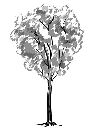 Single tree sketch. Black and white drawing isolated on white background. Simple art. Can be used for card banner template. Vector illustration Reklamní fotografie - 122700082