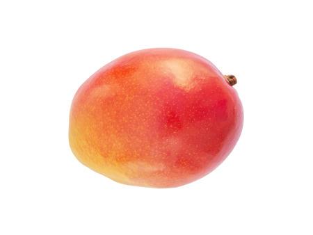 picked: Mango fruit isolated - fruit of Senegal  region of Casamance