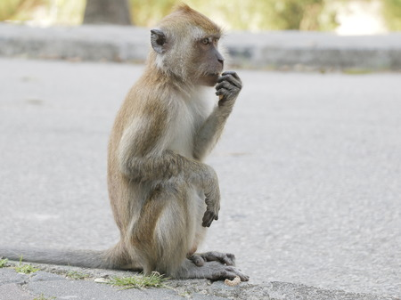 Siting and eating Makake, sitting, asunder Makake