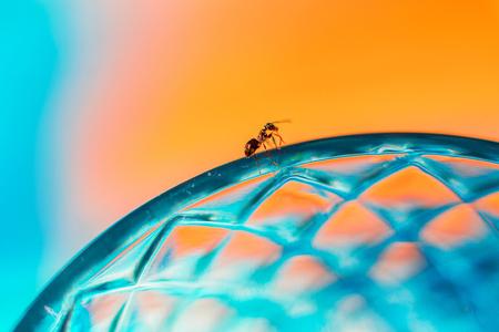 The ant walks along the edge of a glass beaker