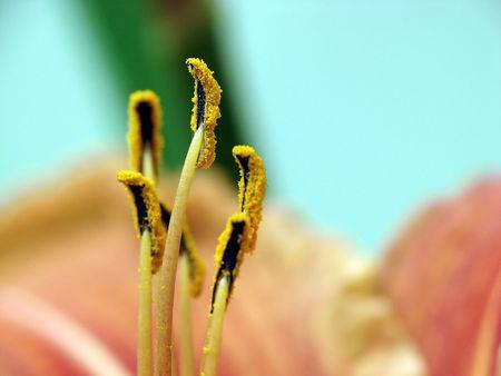 macrocosm: Flora - the Lily Stock Photo