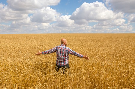 Happy hairless farmer with beard in ripe wheat field with handsup to a blue sky. great harvest. Stock Photo