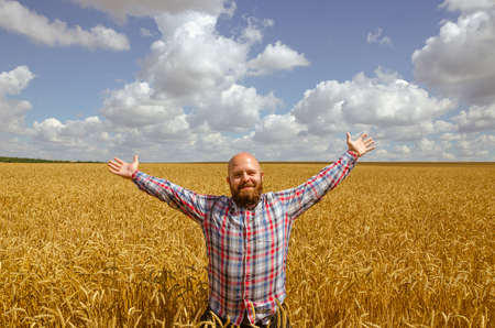 harvest field: Happy hairless farmer with beard in ripe wheat field with handsup to a blue sky. great harvest