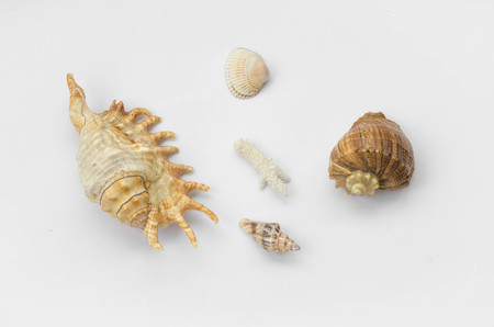 The group of natural colorful seashells isolated on a white background. Collage of my downscaled pictures