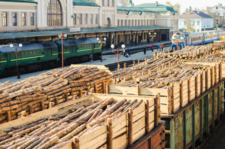 deforestacion: Environment, nature and deforestation forest - felling of trees. The concept of a global problem. Freight train loaded with pine trunks