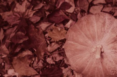 Herbstlaub auf hölzernem Hintergrund, Fallblattrahmen mit Hagebutten, rote Beeren, Kegel und erntenden den orange Kürbis, selektiver Fokus, getont. Danksagungskarte Standard-Bild - 86946903