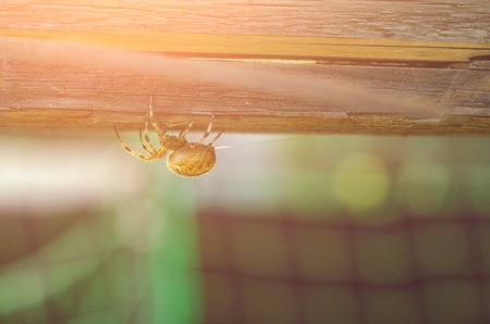 Orange Yellow Spider in a web located on a wood deck hand rail