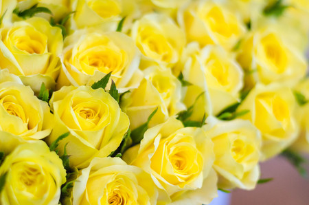 Bouquet of fresh yellow roses, flowers bright background Stock Photo