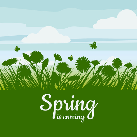 Spring is coming. Green field, flowers, sky Camomile grass dandelion