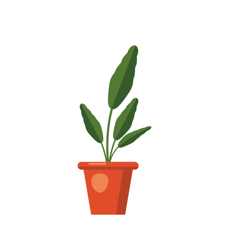 Strelitzia reginae, flower or bird of paradise