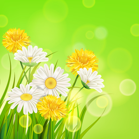 Spring daisies and dandelions background fresh green grass