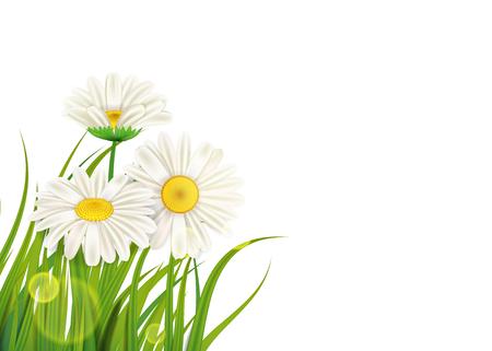 Frühlingskamillenhintergrund frisches grünes Gras Vektorgrafik