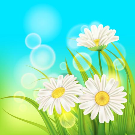 Spring chamomile background fresh green grass