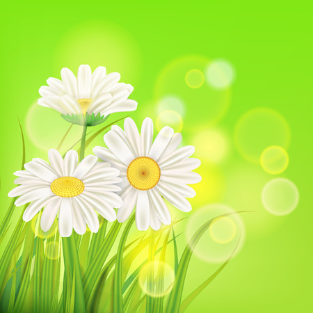 Spring chamomile background fresh green grass Ilustracja