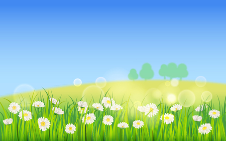 Template background Spring field of flowers of daisies and green juicy grass, meadow, blue sky, white clouds