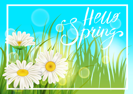 Spring daisies, chamomiles juicy green, lettering Spring, grass background Template for banners, web, flyer. Vector illustration isolated.