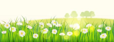 Vorlagenhintergrund Frühlingsblumenfeld von Gänseblümchen und grünem saftigem Gras, Wiese, blauer Himmel, weiße Wolken