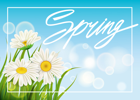 Spring daisies background fresh green grass, pleasant juicy spring colors