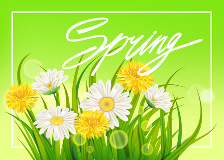 Spring daisies and dandelions background fresh green grass, pleasant juicy spring colors Vector Illustratie
