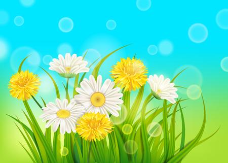 Margaritas de primavera y fondo de diente de león hierba verde fresca