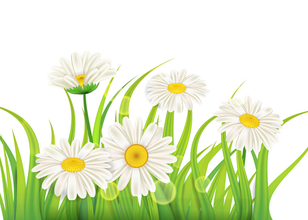 Spring chamomile background fresh green grass