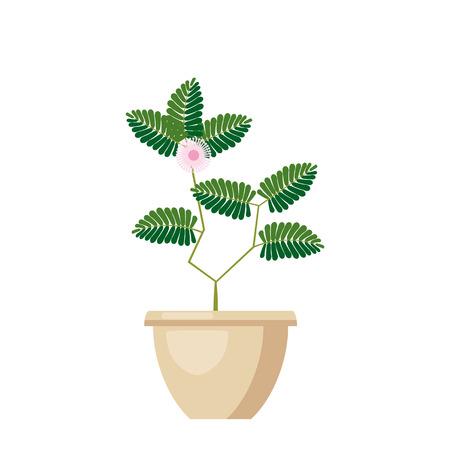 Pink flowering Angraecum distichum. Green leaves, pink flowers flowering plant in vase