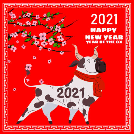 Happy Chinese 2021 new year greeting card. Year of the ox. Cute bull with red scarf and blooming tree flowers. Chinese zodiac symbol traditional holidays cartoon character. Vector illustration