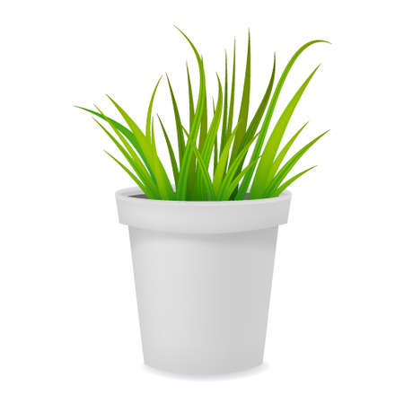 Flower pot realistic with grass white ceramic or plastic. Vector template