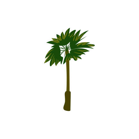 Palm tree tropical. Exotic floral plant with leaves isolated. Vector Vectores